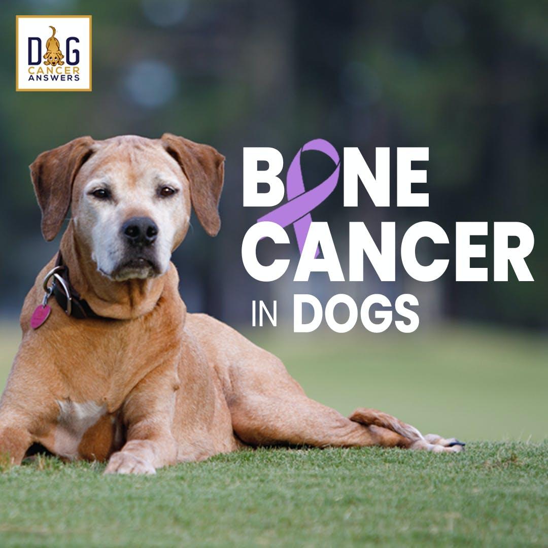 Dog Bone Cancer – Symptoms & Amputation & Treatments | Dr. Demian Dressler Q&A