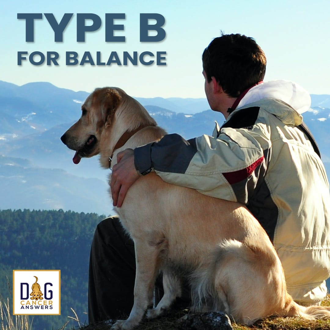 How Type B for Balance Treats Dog Cancer | Molly Jacobson Deep Dive