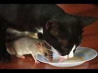 Cat n mouse.jpg?ixlib=rails 2.1