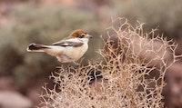 Cutie bird.jpg?ixlib=rails 2.1
