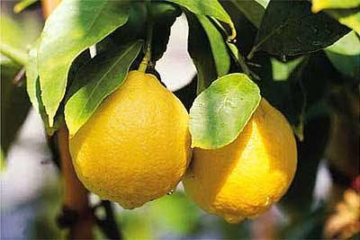 535 - Perché si dice limonare?