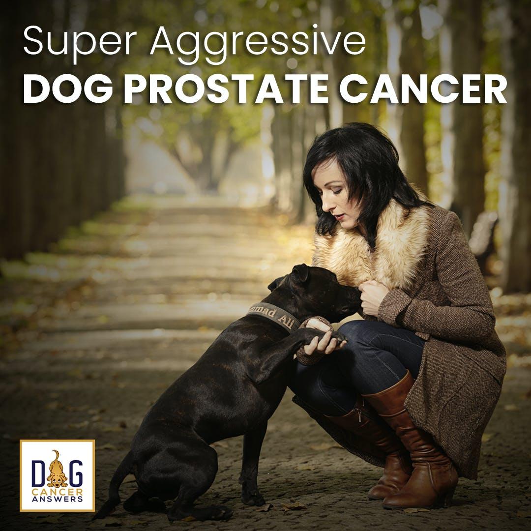 Super Aggressive Dog Prostate Cancer | Dr. Demian Dressler Q&A