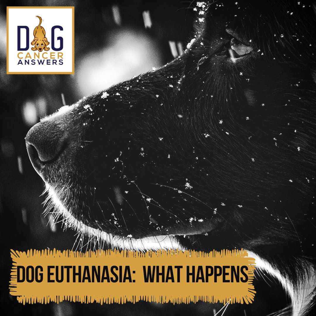 Dog Euthanasia: What Happens │ Dr. Nancy Reese Q&A