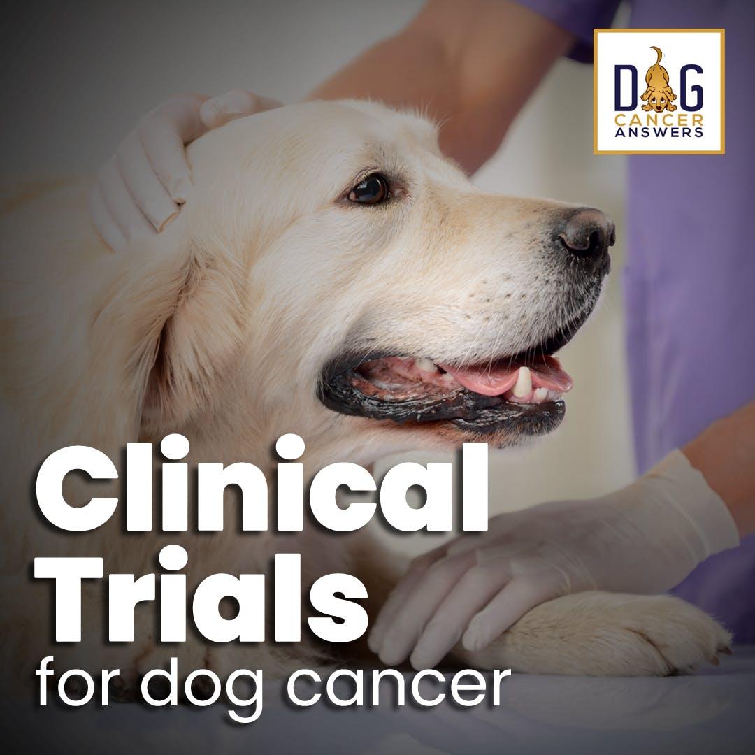 Clinical Trials for Dog Cancer | Dr. Trina Hazzah Deep Dive