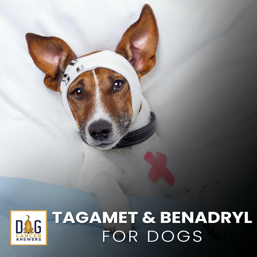 Tagamet and Benadryl for Dogs | Nancy Reese, DVM, MPVM, PhD Deep Dive