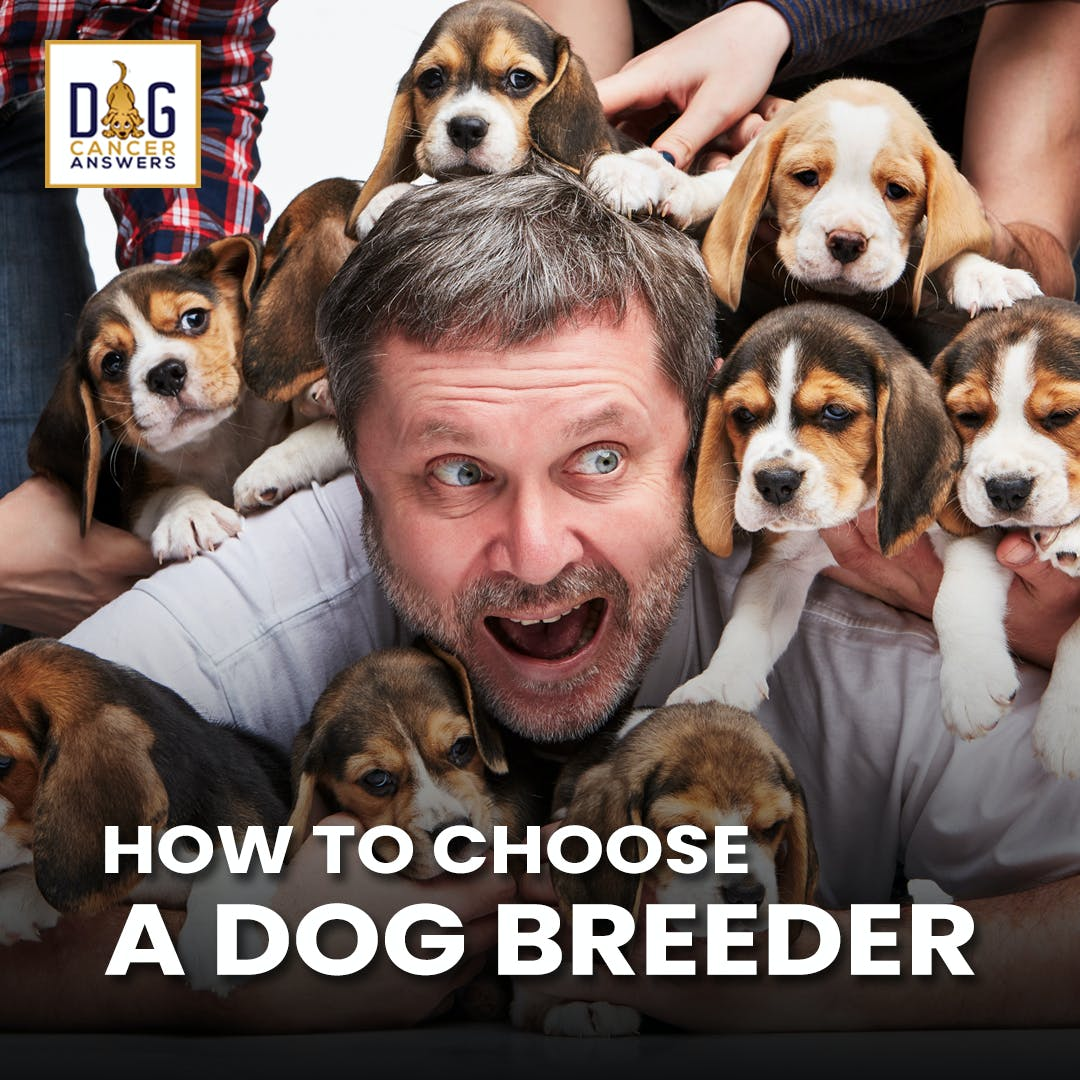 How to Choose a Dog Breeder | Dr. Jerry Klein, DVM Deep Dive
