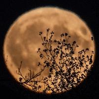 Uploads 2f1526341199115 t29g57v60z b69459f57b27aede9eaee1d23be2c267 2f2018 05 15 omnibus episode 49 the moon illusion thumbnail square.jpg?ixlib=rails 2.1