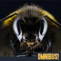Uploads 2f1545175867755 r4gtrppp4lh 3ab9d99c55b51a6f61acdcd532caa70a 2f2018 12 18 omnibus episode 111 telling the bees thumbnail square.jpg?ixlib=rails 2.1