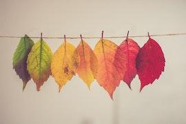 Ep. 185: A Thanksgiving Gratitude Assignment